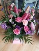 Pink and Lilac Aqua Pack